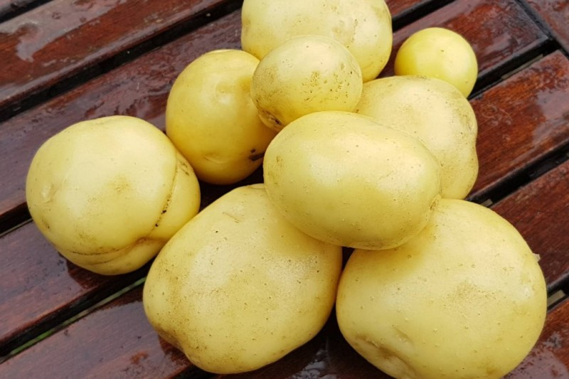 Nové zemiaky